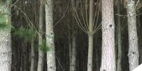 51 hectáreas - IX Región