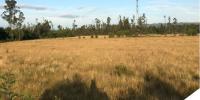 Campo 97 Hectáreas - IX Región